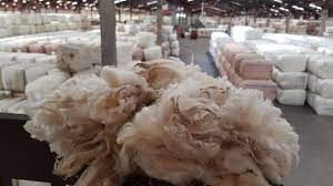 Proposal to merge wool companies to go to farmer vote