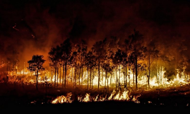 65 dead in major forest fires