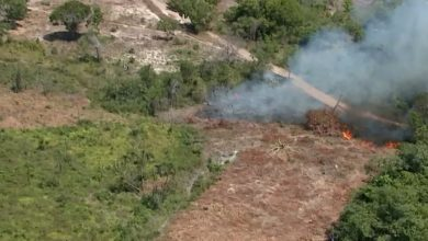 The Amazon region of Maranhão has already had more than 70% of deforestation in the last decades — Photo: Reproduction/TV Mirante